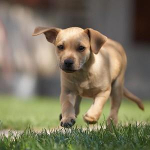 Ferienwohnung Bad Camberg - Hunde sind willkommen